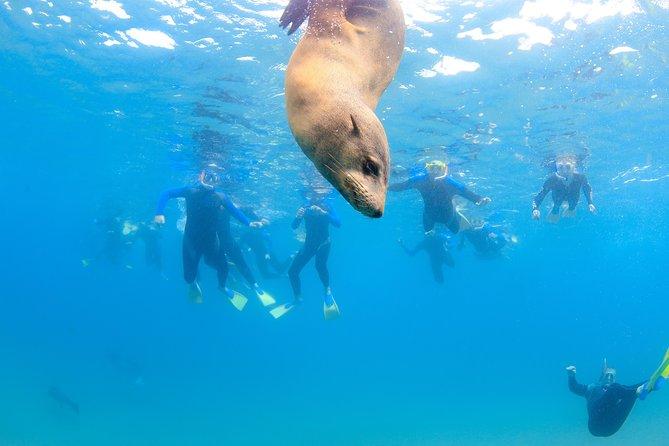 3 hour Dolphin and Seal Swim (NOV-APR), Peninsula de Mornington, AUSTRALIA
