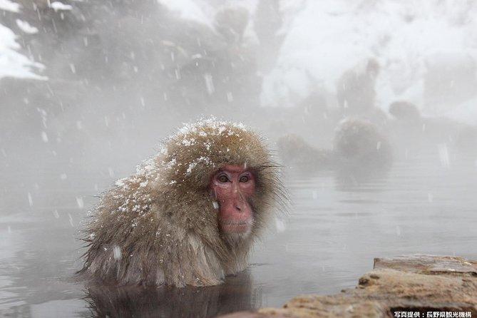 1Day Snow Monkey Tour with Sukiyaki Lunch from Nagano station