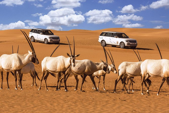 Desert Conservation Wildlife Drive with Breakfast at Al Maha Desert Resort