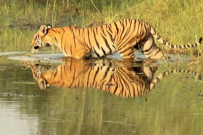 One week Tiger Safari in Bardia National Park Nepal and Kathmandu Tour