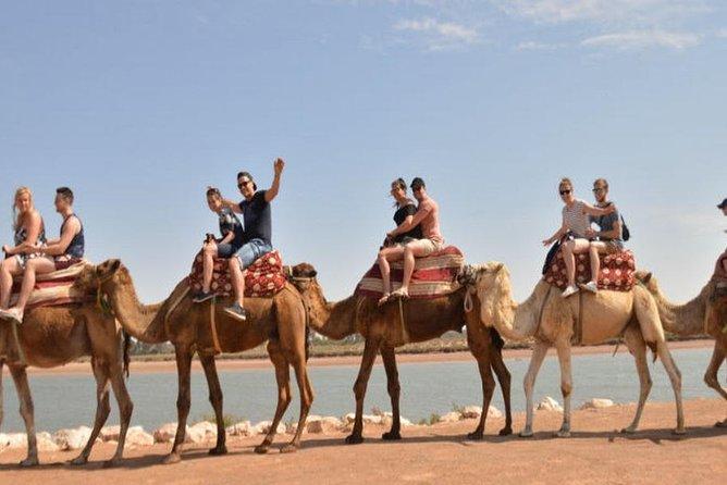 Agadir Camel Experience