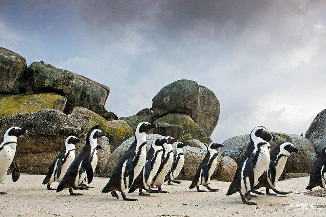 Table Mountain Ticket-Wine-Penguins & Cape of Good Hope Small Group Tour