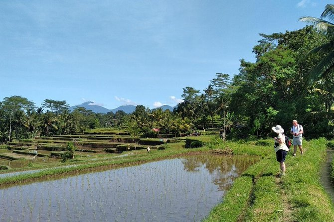 Bali rice fields trekking