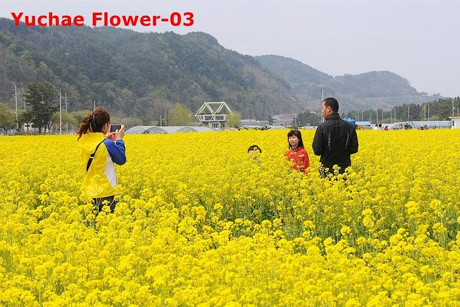 The Beauty of the Korea Cherry Blossom Discover 9days 8nights