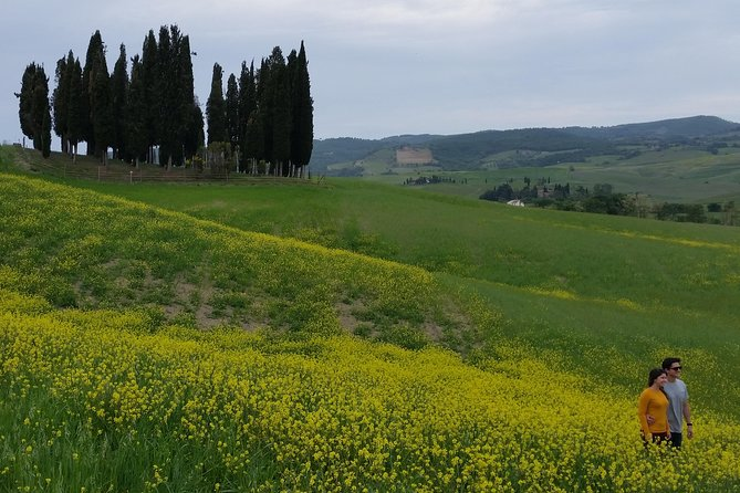Shared Half Day Chianti Wine Tour (Tuscany) - Ultimate Shared Tour
