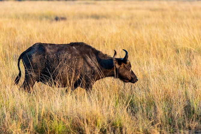 5 Days Kidepo National Park, Rhino and Murchison Falls