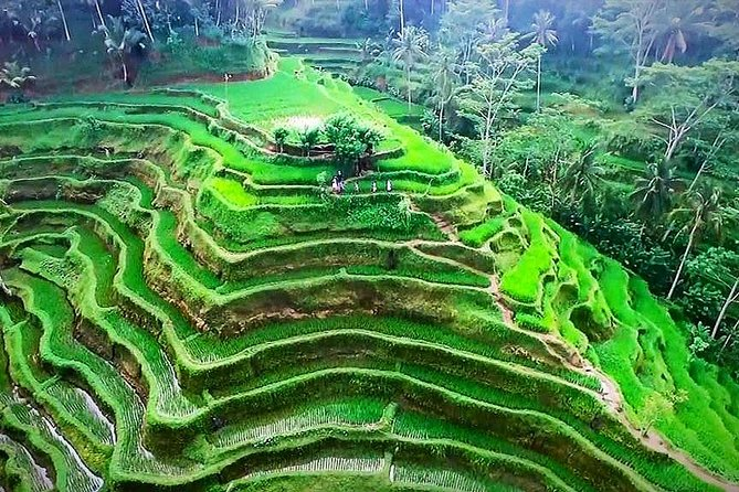 Ubud Nature Tours including Culture, Arts, Temple, Volcano, Rice field & Shows