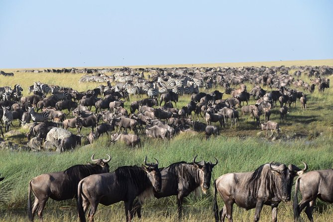4 Days Serengeti Safari (Serengeti & Ngorongoro) -Private Tanzania Safari Tour