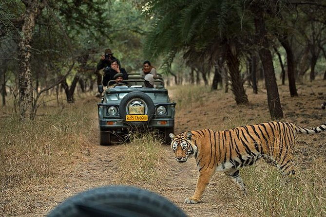 Private 6-Day Ranthambhore Tiger Tour including Delhi, Agra and Jaipur