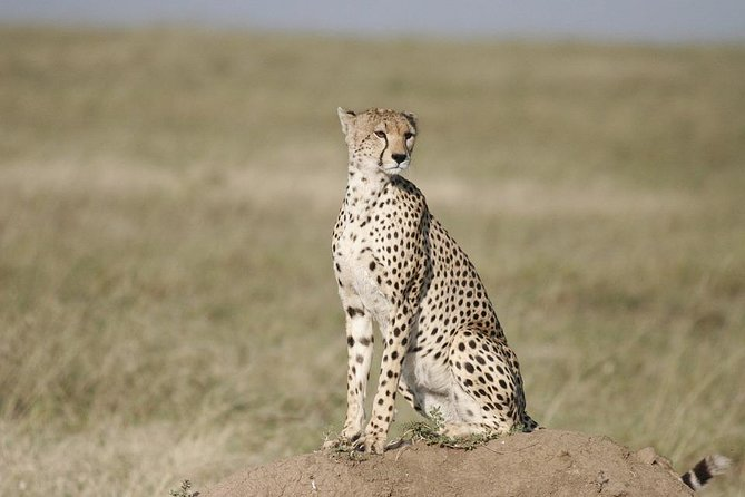 3 Days safari in Masai Mara Budget or Luxury Tour Package