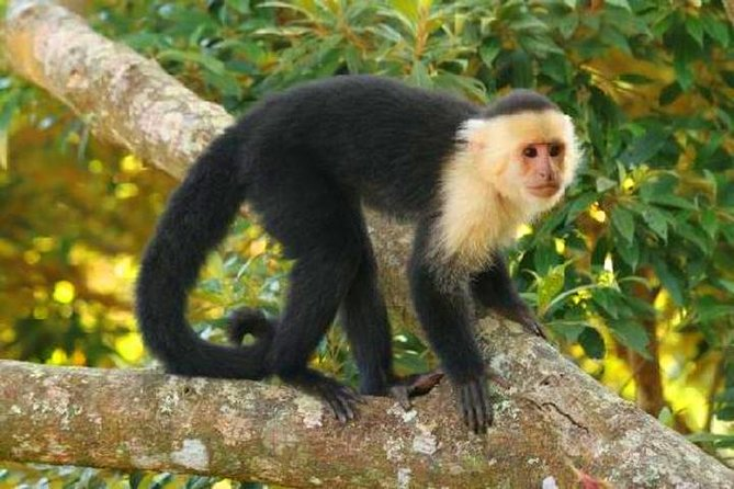 Zipline, Sloths & Monkeys, Chocolate Factory, Private Vehicle for Cruise Family