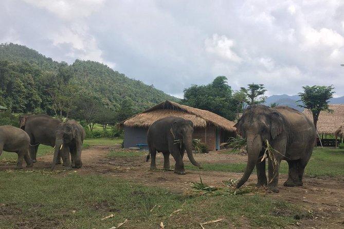 3 Experiences: Doi Inthanon Tour, Elephant Sanctuary, Trekking Trail