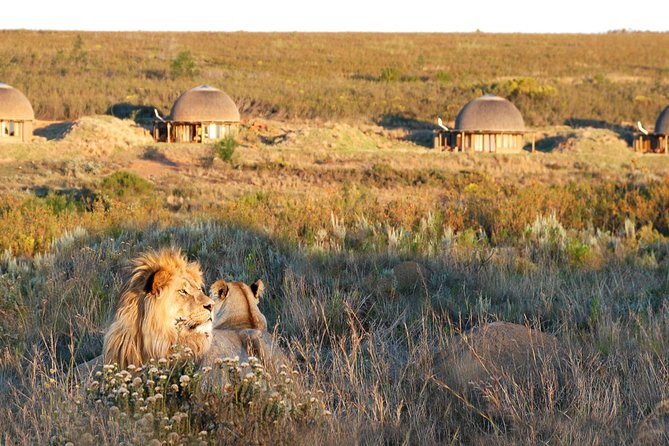 3-Day Luxury Gondwana Big 5 Safari & Whale Coast Private Tour from Cape Town