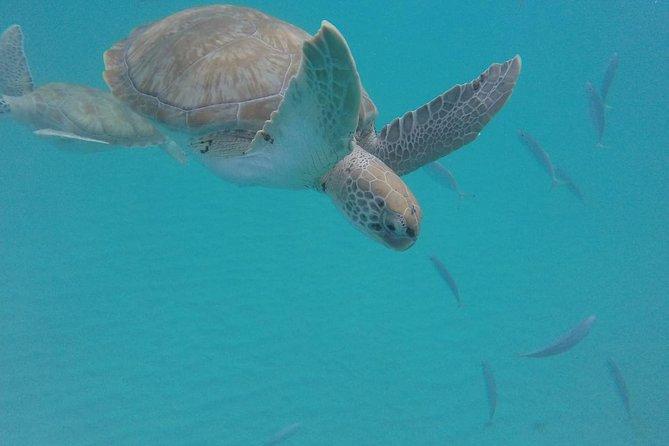 """Barbados """"Private"""" Turtle Swim & Shipwreck Tour"""