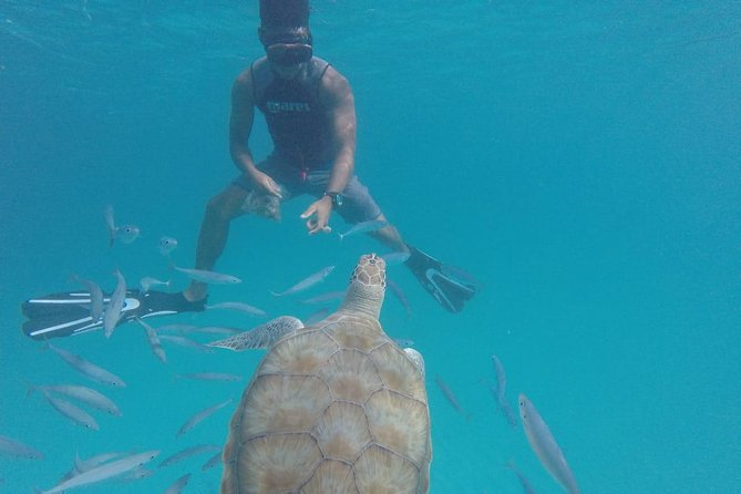 "Barbados ""Shared"" Turtle Swim and Shipwreck Tour"