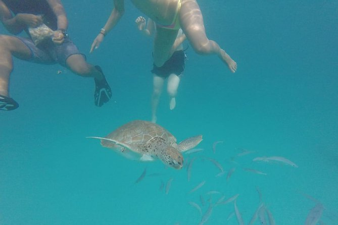 "Barbados ""Shared"" Turtle Swim and Shipwreck Tour photo 10"
