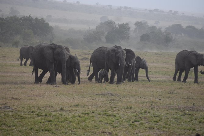 Splendid safari, 5 days, Masai Mara & Amboseli