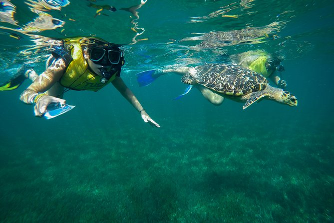Sea Turtles, Statues, Reef, Shipwreck snorkeling & Parasailing Combo Tour Cancun