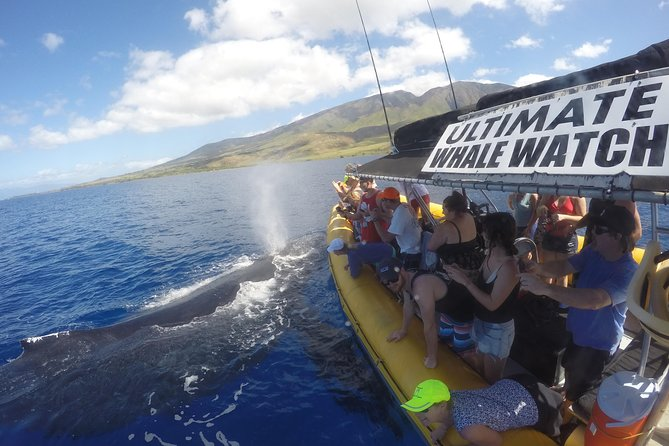 3-Hour Whale Watch Tour from Lahaina Harbor