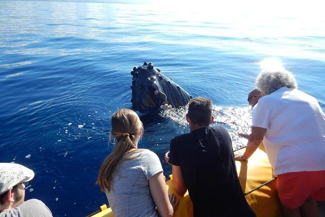 1.5 Hour Early Bird Whale Watch Tour from Lahaina Harbor photo 3