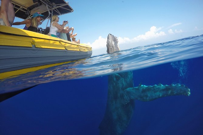 1.5 Hour Early Bird Whale Watch Tour from Lahaina Harbor photo 2