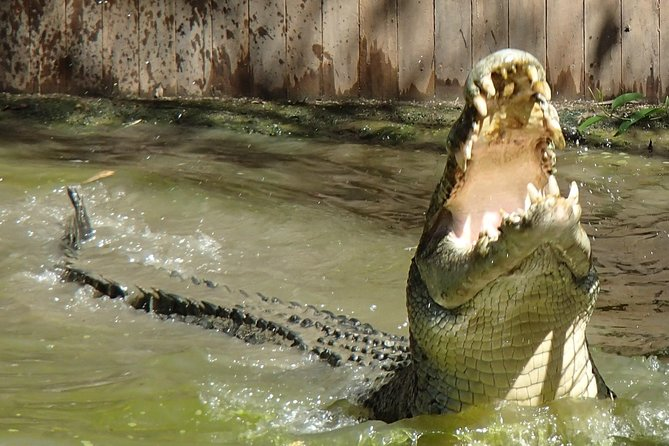 Hartley's Big Crocodile Feeding Experience from Cairns or Palm Cove