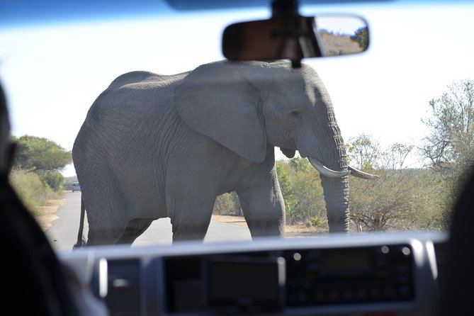 Classic Kruger National Park 3 or 4 day. photo 8