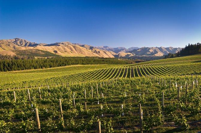 Full Day Winemaker's Tour in Marlborough