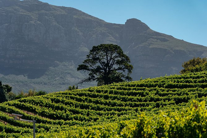 Cape Town Classics Private Tour: Wine, Nature & Culture photo 6