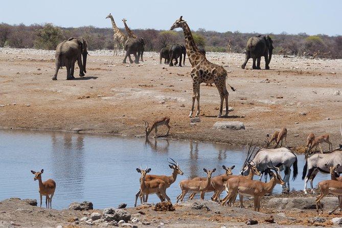 Namibian Safari Package