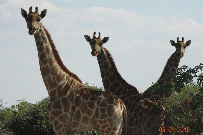 African Safari Adventure in Namibia