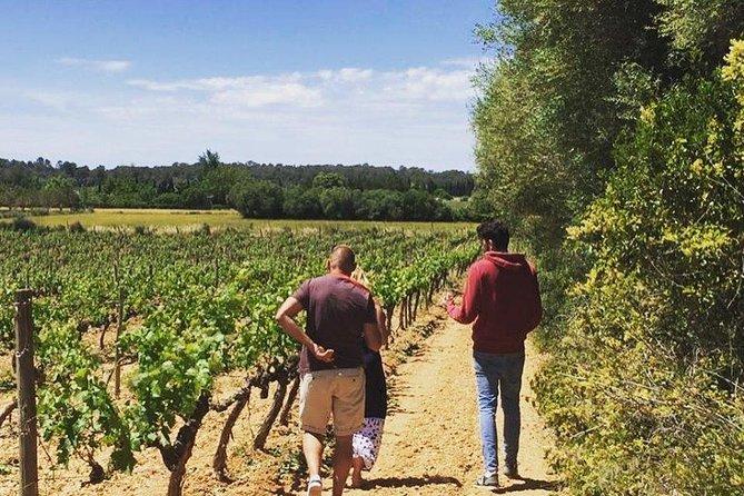 Sa Clasta Mallorca Wine Tours