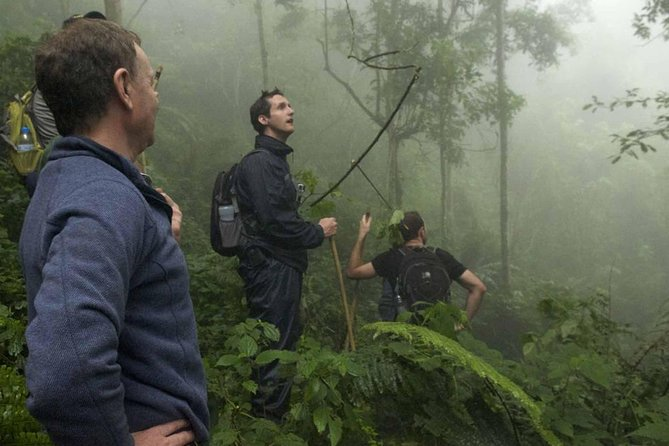 Track chimpanzee's & walk on a canopy over Nyungwe Forest