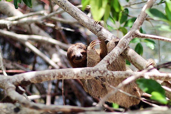 Daniel Johnson's Monkey & Sloth Hangout + Beach Day