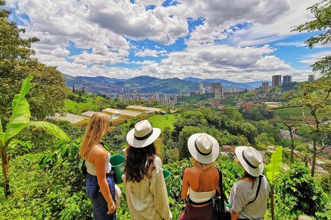 Halbtägige Tour durch die Kaffeeplantage: Erfahren Sie bei uns alles über Kaffee