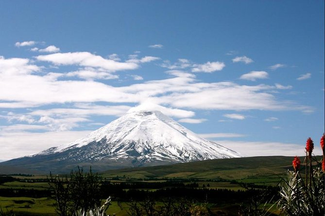 private tour Cotopaxi National Park and Rose farm