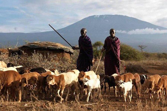 Amboseli Day Tour from Nairobi