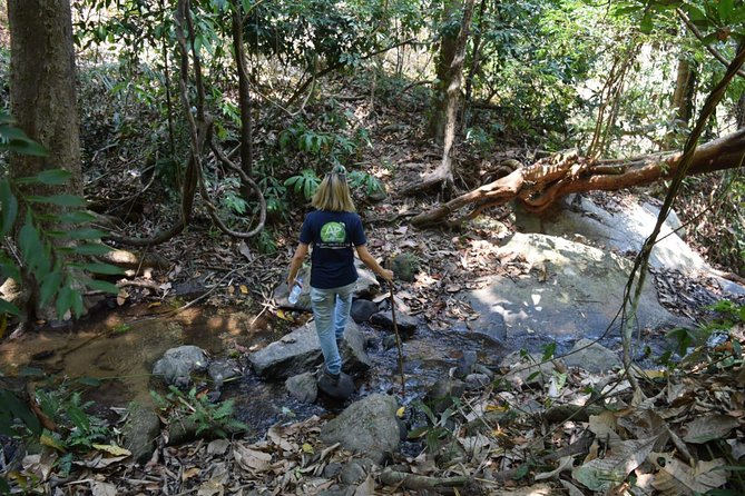 Half Day Trekking Doi Suthep - Pui National Park Area (Private Tour) photo 1