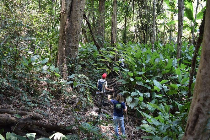 Half Day Trekking Doi Suthep - Pui National Park Area (Private Tour) photo 2