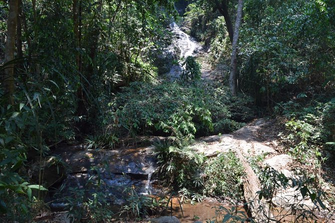 Half Day Trekking Doi Suthep - Pui National Park Area (Private Tour) photo 3