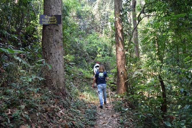Half Day Trekking Doi Suthep - Pui National Park Area (Private Tour) photo 6