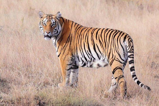 4 Nights 5 Days Jaipur-Ranthambore Tour