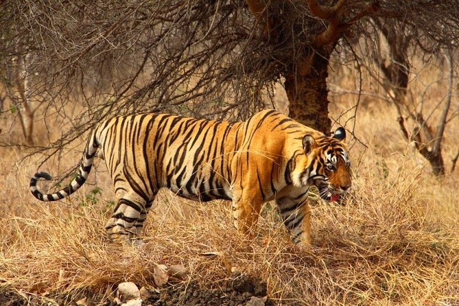 2 Days Ranthambore Tiger Safari with Tickets