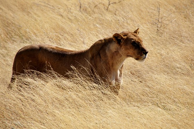 Nairobi park Morning Safari and a visit to Giraffe centre