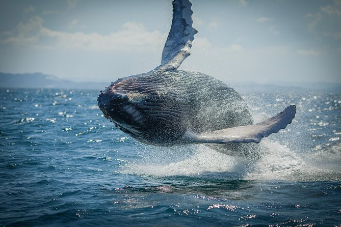 2-Hour Guided Whale Watching Tour at Noosa