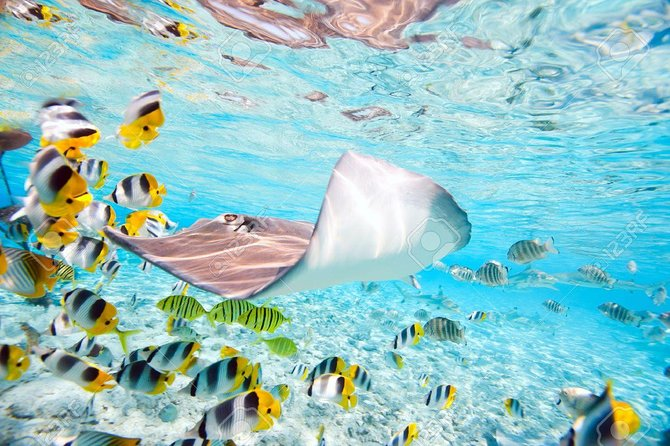 Half Day Group Snorkeling Tour include Sharks and Rays