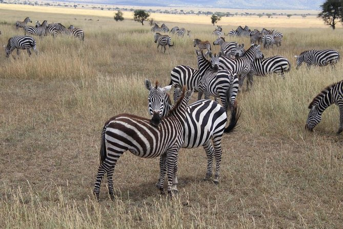 Comb: (7 day's Rongai Route +4 day's Safari)