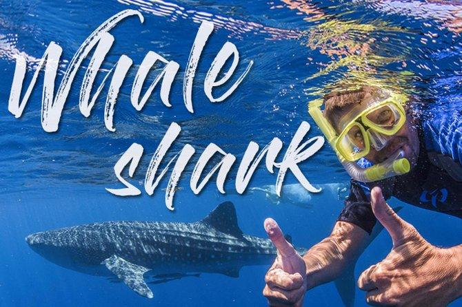 Shark Whale Tour