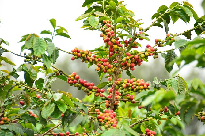 Exciting Coffee Tours From Nairobi