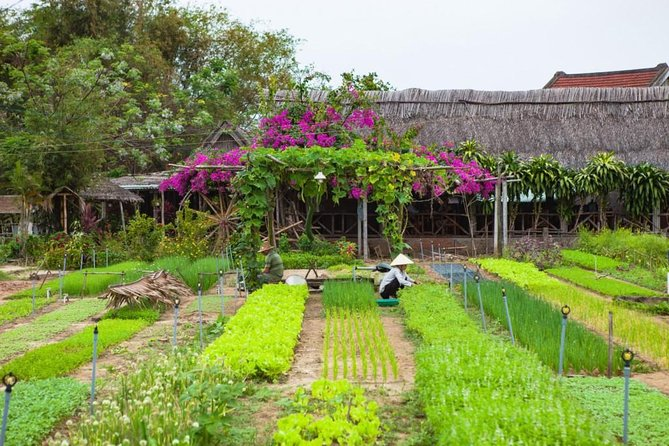 Be a farmer in Tra Que herb village